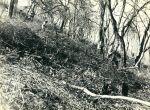 DESMATAMENTO-LOCAL-ano-1961